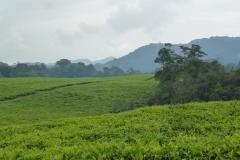 Ruanda_09